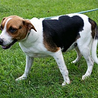 Adopt A Pet :: Sissy is reduced! - Brattleboro, VT