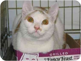 Domestic Shorthair Cat for adoption in Little Falls, New Jersey - PEPE (SC)
