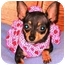 Photo 3 - Chihuahua Dog for adoption in Osseo, Minnesota - Princess