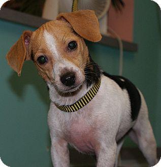 Beagle Mix Dog for adoption in Niceville, Florida - Delilah