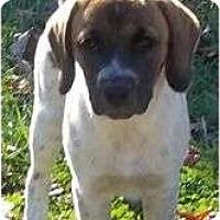 Adopt A Pet :: Webber - Plainfield, CT