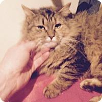 Adopt A Pet :: Miranda - Pittstown, NJ