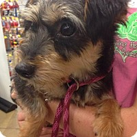 Adopt A Pet :: Grace - Gainesville, FL
