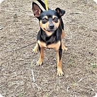 Adopt A Pet :: Max - Tavares, FL