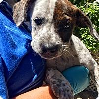 Adopt A Pet :: Deborah - Santa Ana, CA