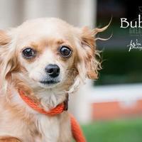 Adopt A Pet :: Bubbles - Merriam, KS