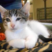 Adopt A Pet :: Cosmos - Oskaloosa, IA