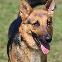 Adopt A Pet :: Kelsey - Portland, ME