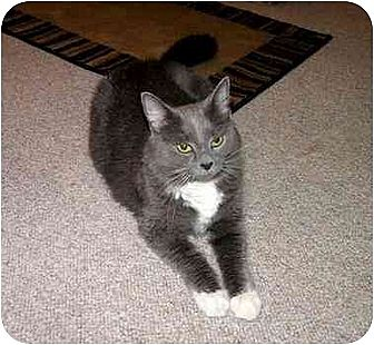 Domestic Longhair Cat for adoption in Lilburn, Georgia - Lillian