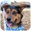 Photo 1 - German Shepherd Dog Mix Dog for adoption in Cincinnati, Ohio - Leon