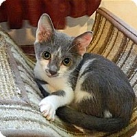 Adopt A Pet :: Bowie - The Colony, TX