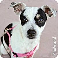 Adopt A Pet :: January - Gilbert, AZ