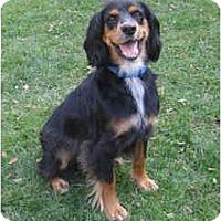 Adopt A Pet :: Gordon - DeKalb, IL