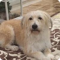 Adopt A Pet :: Jax - Kingwood, TX