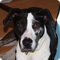 Adopt A Pet :: Bijou - in Maine - kennebunkport, ME