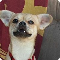 Adopt A Pet :: Jeremy - Burbank, CA
