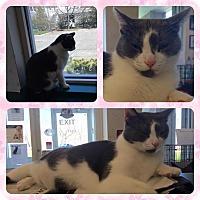 Adopt A Pet :: Mimi aka Mama - Speonk, NY