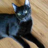 Adopt A Pet :: Jade - Spring, TX