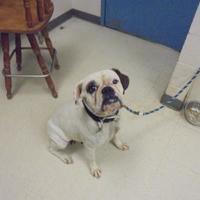 Adopt A Pet :: Zena - Gulfport, MS