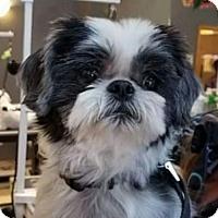 Adopt A Pet :: Bonnie - Livonia, MI