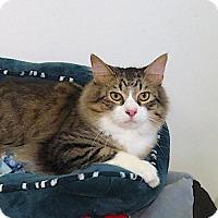 Adopt A Pet :: Rex - Lakewood, CO