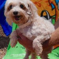Adopt A Pet :: Louie - Payson, AZ