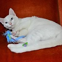 Adopt A Pet :: Duncan - Buford, GA
