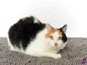 Domestic Mediumhair Cat for adoption in Murray, Utah - DELILAH