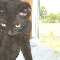 Adopt A Pet :: Bandit - Mexia, TX