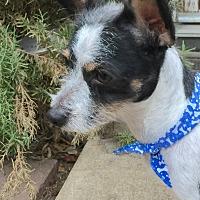 Adopt A Pet :: Pongo - Los Angeles, CA
