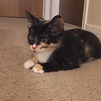 Adopt A Pet :: Jaymes - LaGrange Park, IL