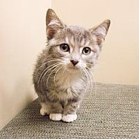 Adopt A Pet :: Dennis - Chicago, IL