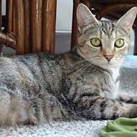 Adopt A Pet :: Peanut - Middletown, CT