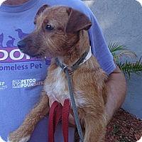 Adopt A Pet :: Abbe - Brooksville, FL