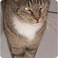 Adopt A Pet :: Addison - Elkton, MD