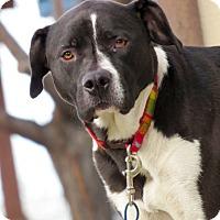 Adopt A Pet :: Sammie - Meridian, ID