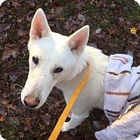 Adopt A Pet :: HUNTER - Powder Springs, GA