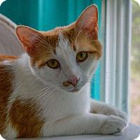 Adopt A Pet :: Otis - Shelby, NC