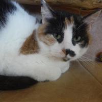 Adopt A Pet :: Rousch - Park Rapids, MN