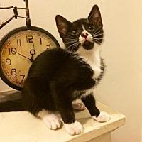 Adopt A Pet :: Boo - Philadelphia, PA