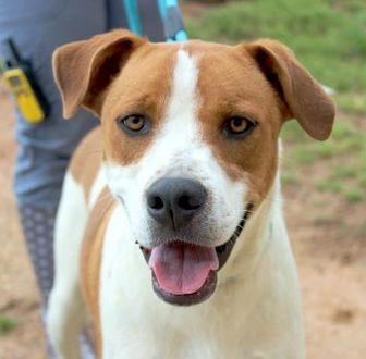 Boxer Mix Dog for adoption in Enterprise, Alabama - Rockefeller