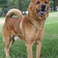 Adopt A Pet :: Buddha - Bristol, IN