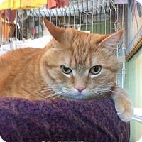 Adopt A Pet :: Charlie - Breinigsville, PA