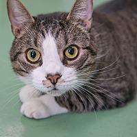Adopt A Pet :: Ricardo - New York, NY
