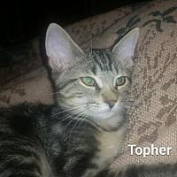 Adopt A Pet :: Topher - Fort Pierce, FL