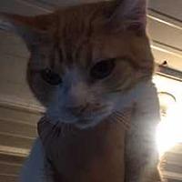 Adopt A Pet :: Nim - Fort Madison, IA