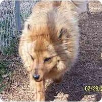 Adopt A Pet :: Andy - York, SC