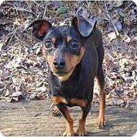 Adopt A Pet :: Rocky#2 - Nashville, TN