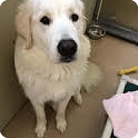 Adopt A Pet :: Kita - MASS 2015 - Lee, MA