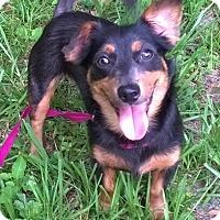 Adopt A Pet :: Marion - Orlando, FL